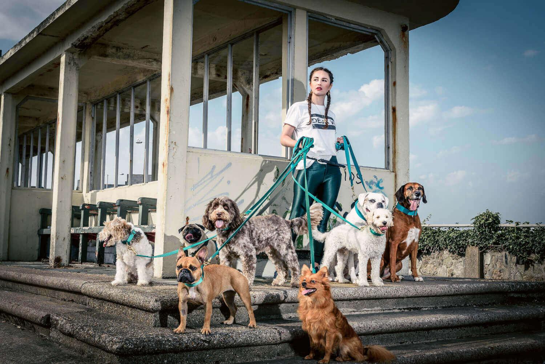 Doggie Apparel Website Design